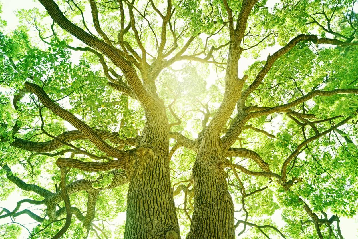 Árvores conseguem absorver mais da metade da poluição do ar