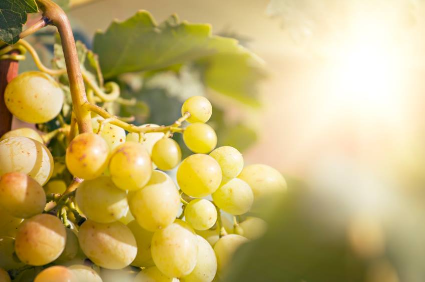 Saiba quais são as 10 frutas ideais para consumir em março e abril