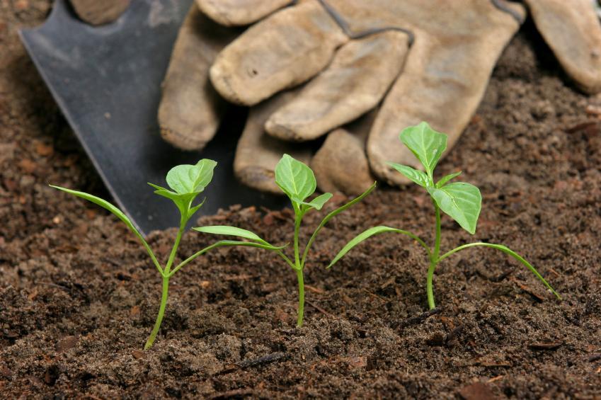 12 passos para começar uma horta comunitária
