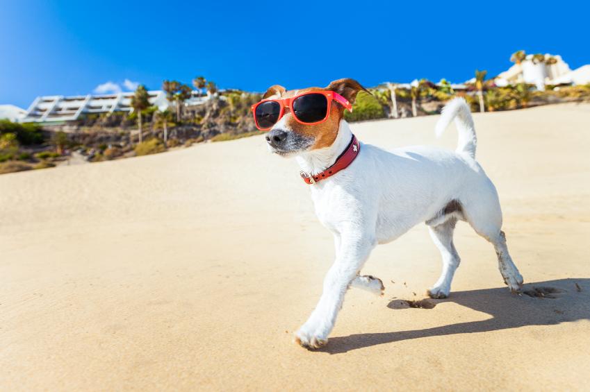 Saiba quais são os cuidados necessários com cachorros e gatos no verão