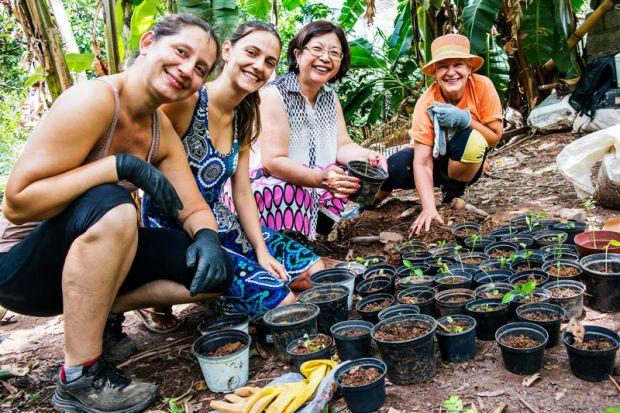 Conheça 6 hortas comunitárias espalhadas por São Paulo