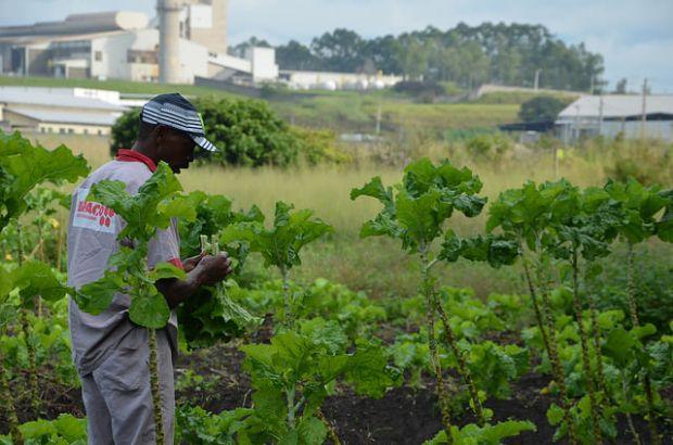 Cidade do RJ investe em horta urbana para abastecer escolas e hospitais