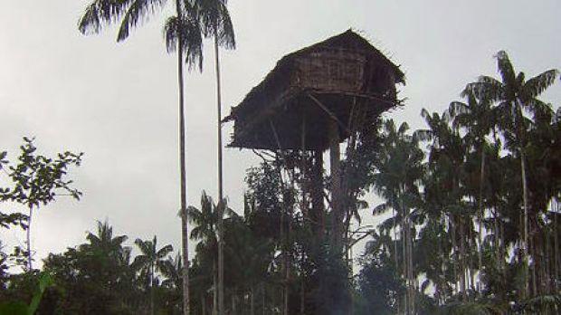 Tribo da Indonésia constrói casas em árvores a 35 metros do chão