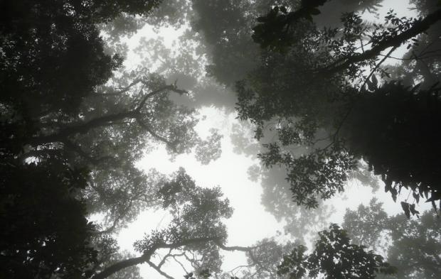 2-codigo-florestal-foto-mayra-rosa-ciclovivo