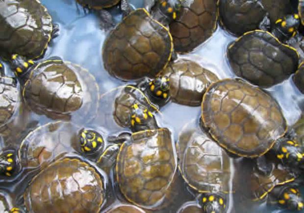 2008-07-05-tracaja-oiapoque
