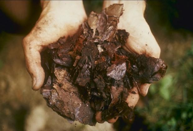 Compost-ciclovivo