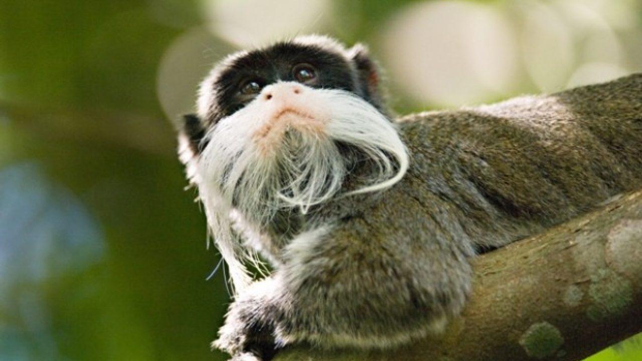 Exposição em SP retrata mudanças na Amazônia em 25 anos - CicloVivo