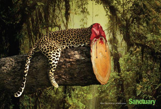 Sanctuary-Wildlife-1-1074x732
