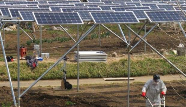Japoneses instalam painéis solares em lavouras