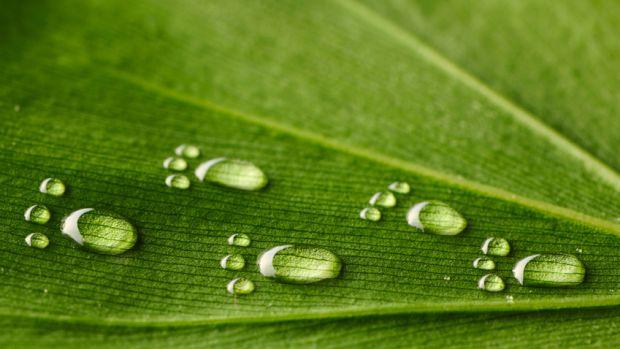 Entenda o conceito de água virtual e calcule a sua pegada hídrica