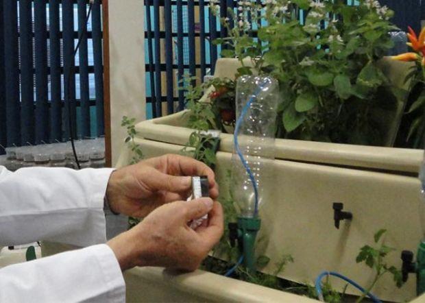 Tecnologia brasileira monitora a umidade do solo e evita desperdício de água