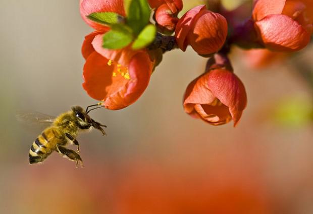 beepx-Pollinationn