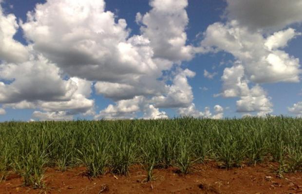 brazil_sugarcane_field