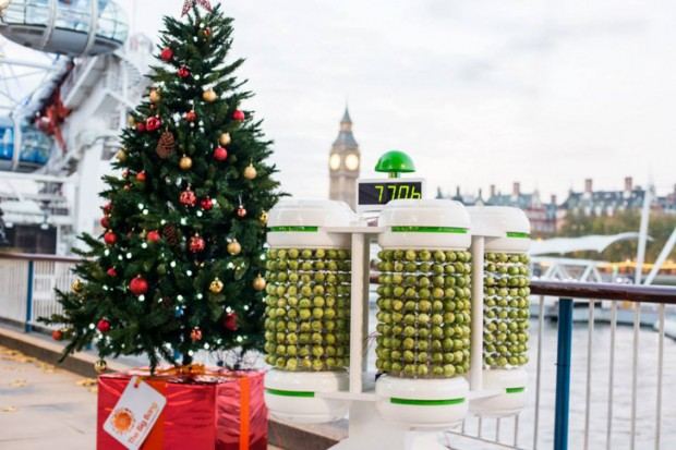 brussels_sprouts_tree_