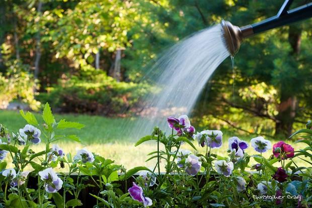 4 dicas para regar corretamente as plantas