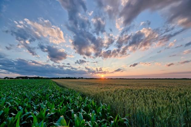cultivo-agricultura-ciclovivo-clima