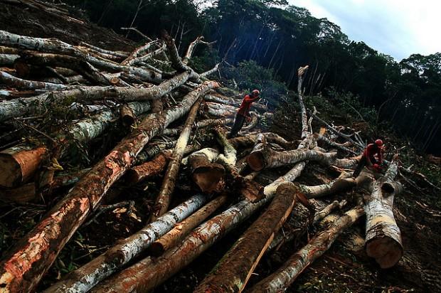 desmatamento-ciclovivo-pesquisa