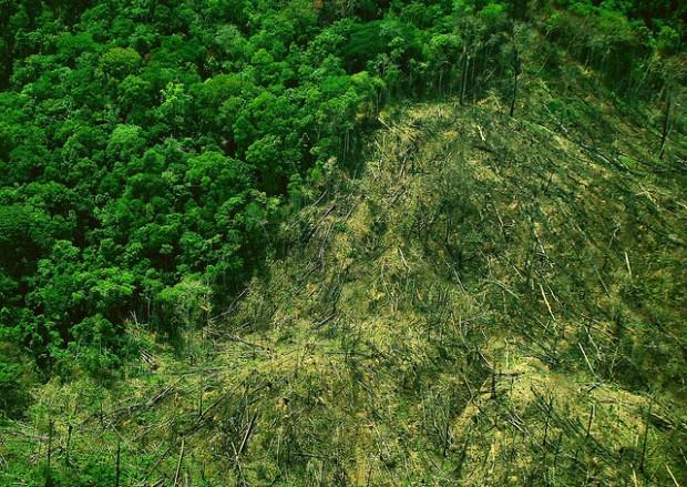 desmatamento_amazonia_floresta