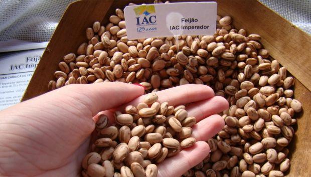 Pesquisadores de Campinas (SP) desenvolvem feijão mais resistente à seca