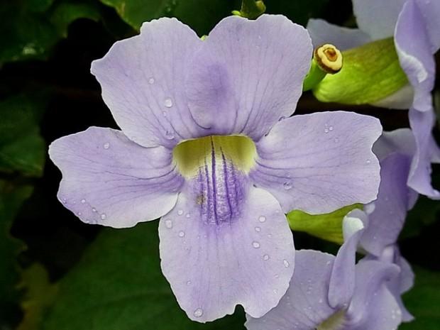 flower-92490_640