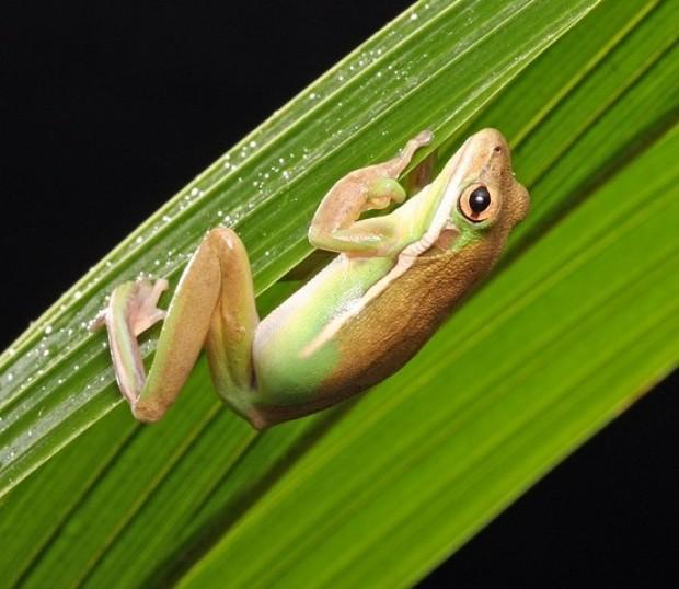 frog-165032_640-ciclo