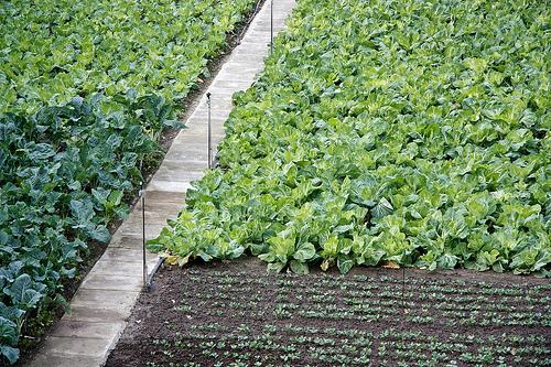 Nova Iorque ganha horta gigante para combater obesidade