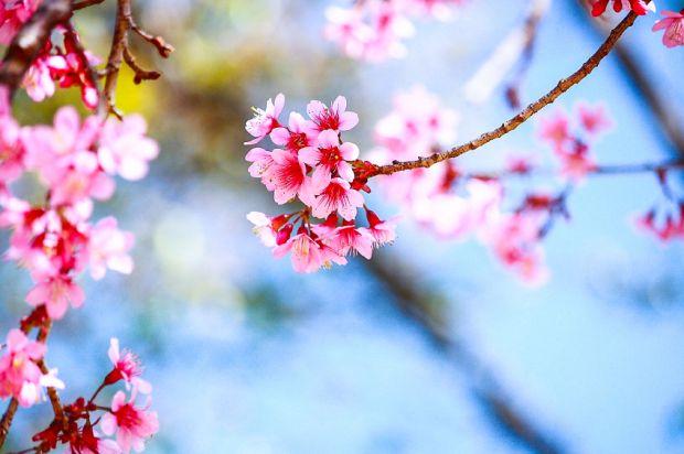 Saiba como deixar suas plantas mais bonitas na primavera