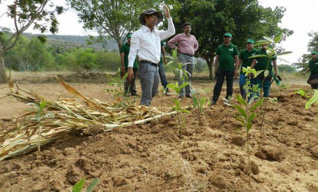 Indiano ensina como plantar 300 árvores no espaço ocupado por 6 carros