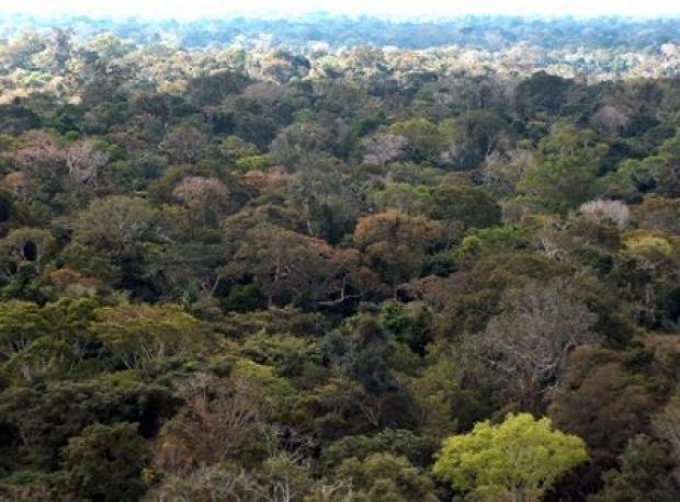 Corte simbólico de árvore em RO marca início do manejo florestal no país
