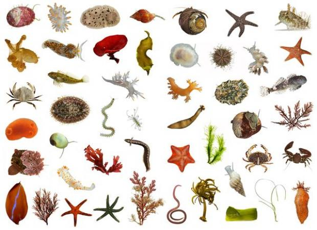 many-new-species-yet-to-be-found_39498_600x450