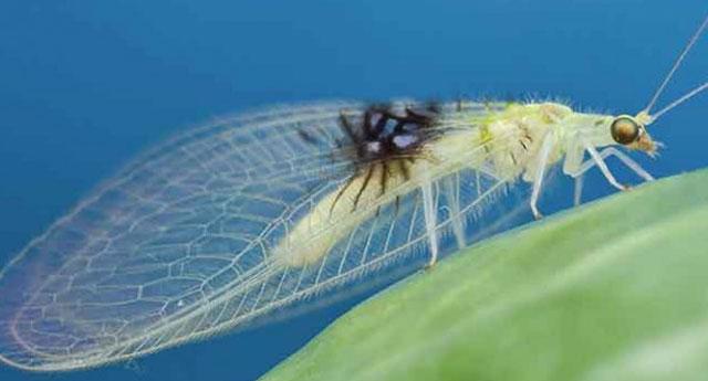 mariposasocial-animal-planet
