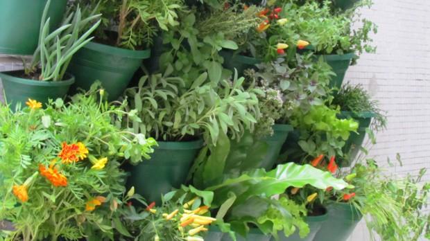 marizeth-estrela-como-cultivar-alimentos-organicos-em-casa-horta-vertical-ciclovivo-1