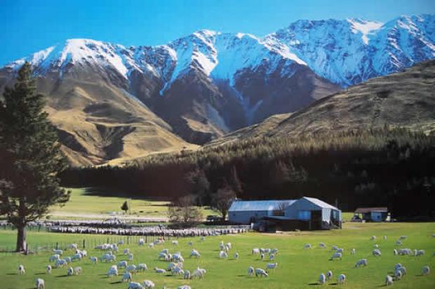 newzealandfarms