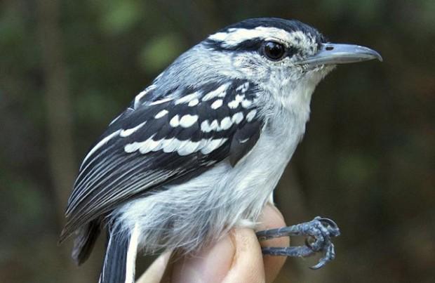 novas-especies-amazonia-animal-planet
