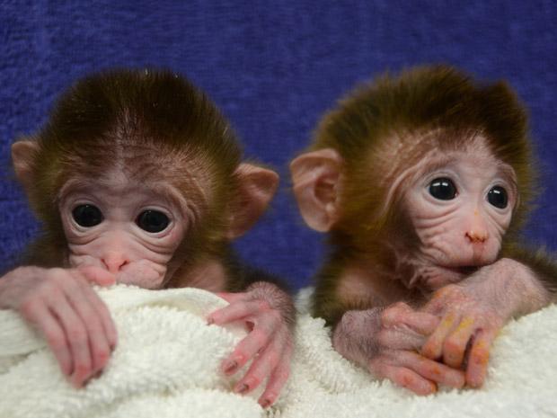 oregon_monkeys