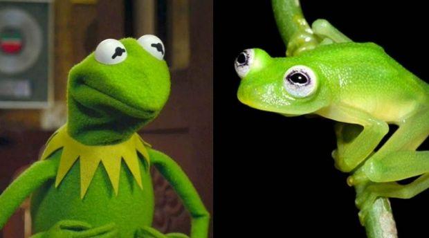 perereca-costarica-muppets