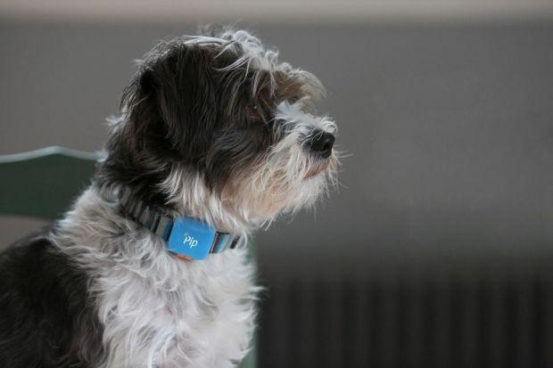 Coleira inteligente informa localização exata e evita que animais se percam