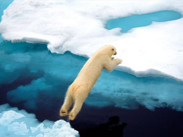 polar-bear-leaping_337_600x450