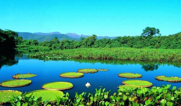 screen4-pantanal