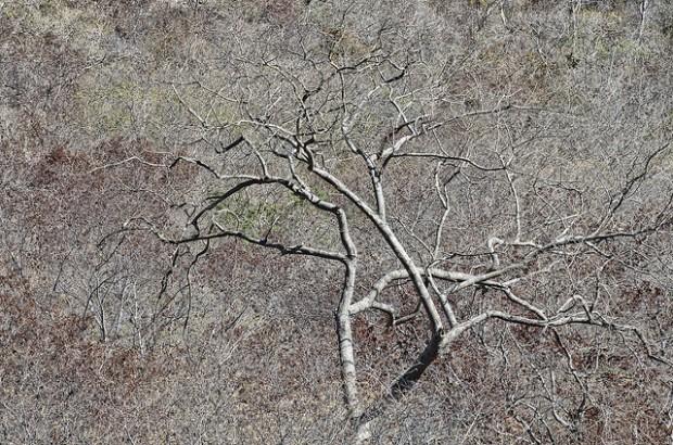 Seca no semiárido deve se agravar nos próximos anos, afirmam pesquisadores