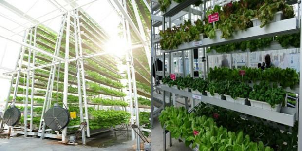 vertical_farm_singapore1