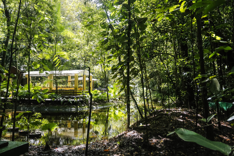 fotos jardim botanico porto alegre: foram alguns dos destaques do local.