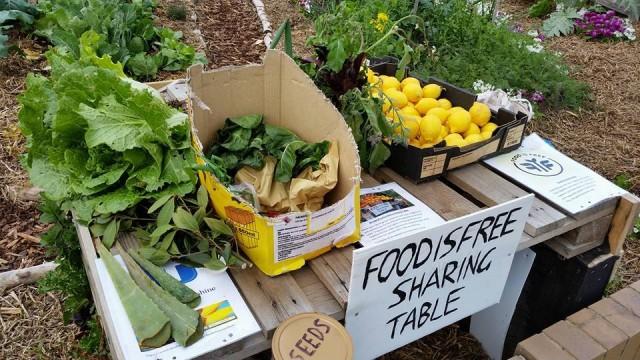 A ideia é compartilhar os alimentos com os vizinhos. | Foto: Food is Free Project