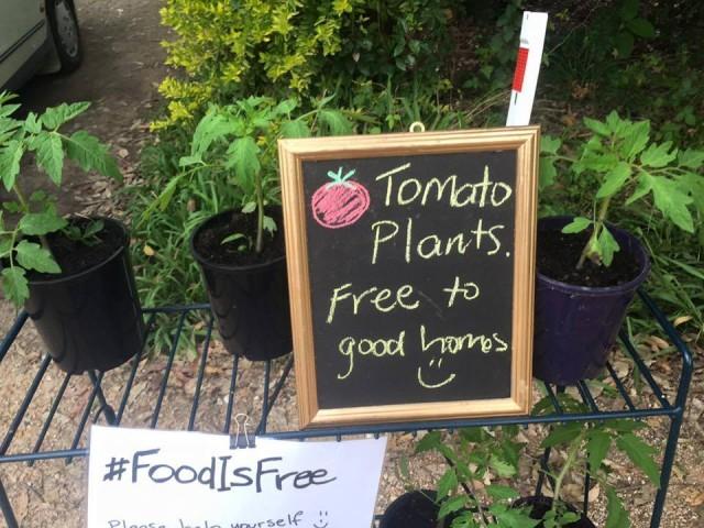 Vai um tomatinho de graça aí? | Foto: Food is Free Project