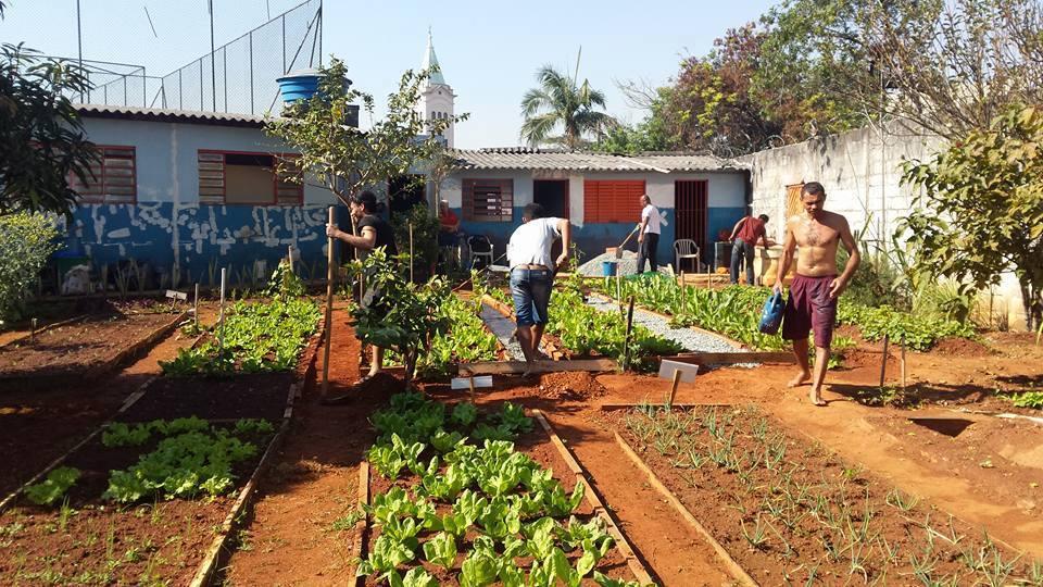Abrigo em SP tem horta comunitária para moradores de rua