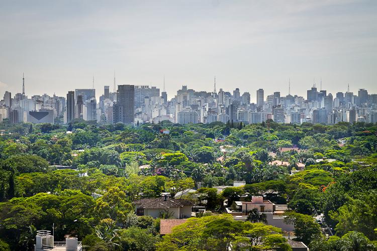 Aplicativo mapeia árvores nativas brasileiras