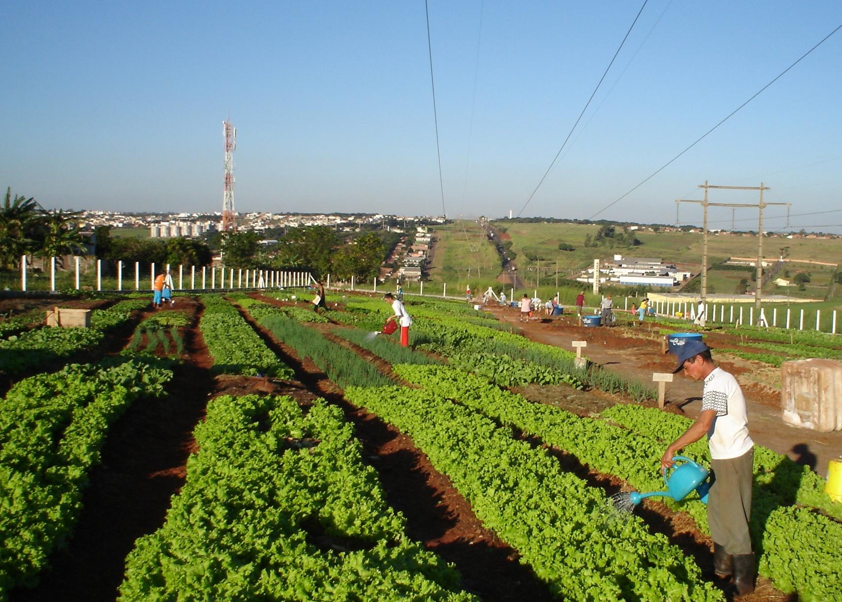 Maringá instala central de compostagem para fertilizar hortas comunitárias