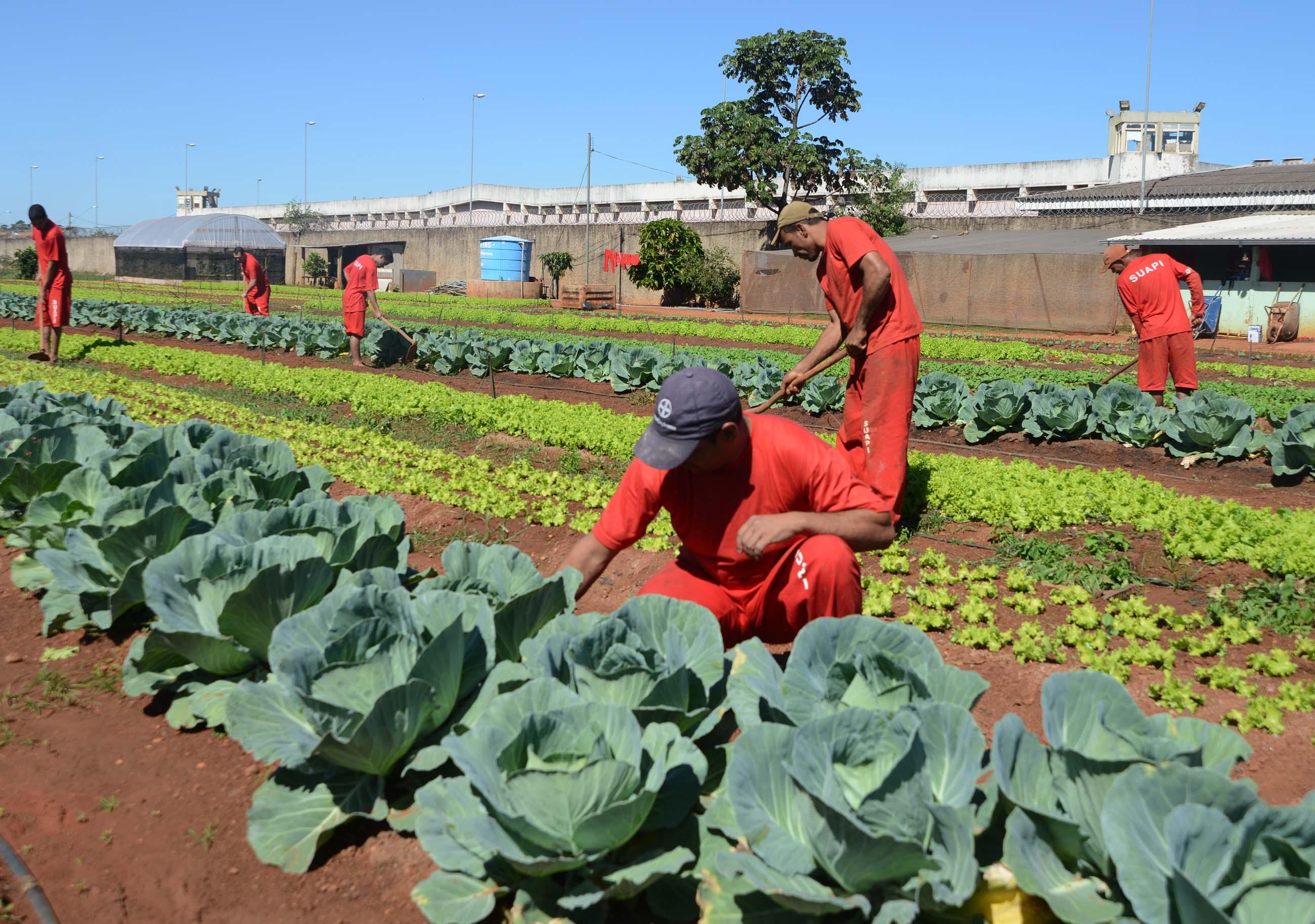 A variedade de alimentos é cultivada pelas mãos de 25 presos. | Foto: Omar Freire/Imprensa MG