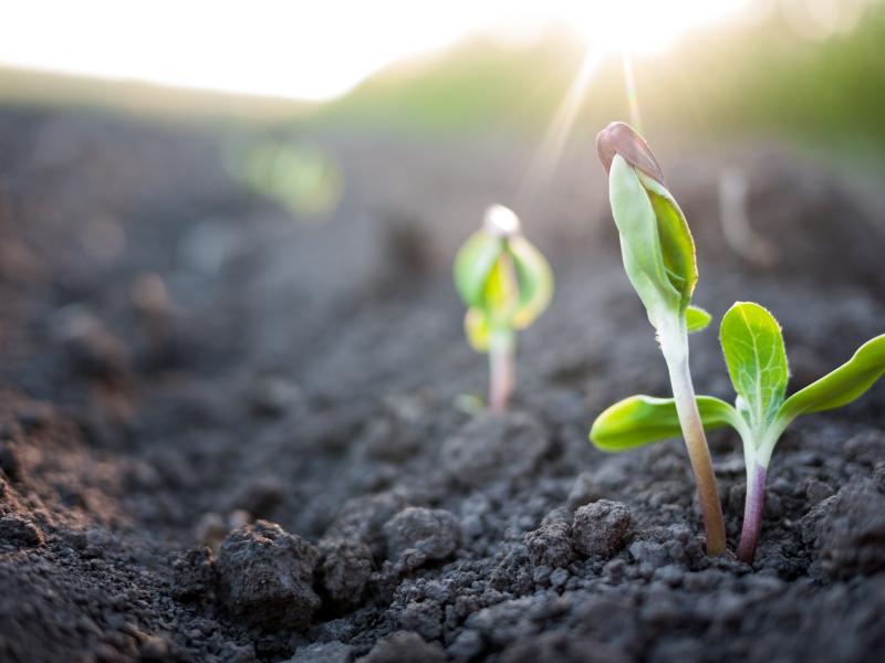A plataforma é um jeito simples de engajar, divulgar e apoiar o plantio de novas mudas.