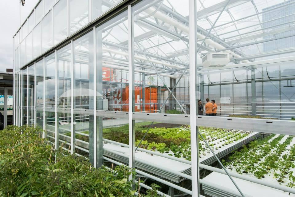São Paulo terá fazendas orgânicas instaladas nas coberturas de edifícios